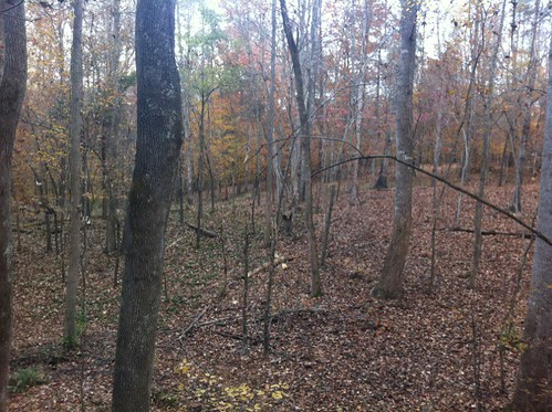 LIVE View from the Deer Stand in North Carolina whitetail deer hunting blog north carolina deer hunting