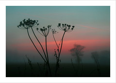 Stalks & Seeds - Norfolk (Nick Caro - Photography) Tags: winter sunset sky nature silhouette landscape seeds caro stalks nickcaro nickcarophotography nickcaronatureatduskanddawn wwwnickcarophotographycouk