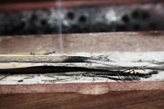 Una vez ms el triunfo de la esperanza sobre la experiencia. (Gemma Jimnez) Tags: madera fuego humo quemado incienso