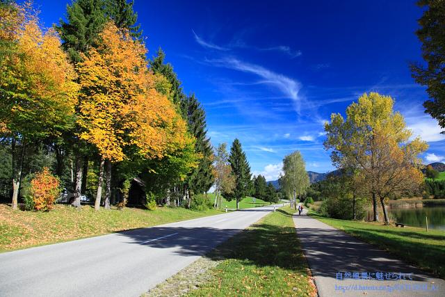 秋のサイクリングロード