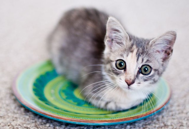 cute rescued kitten on a plate