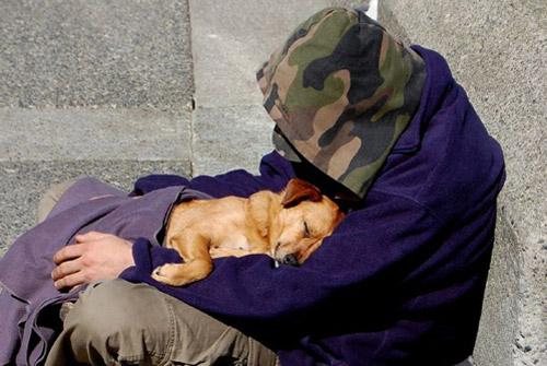 homeless-dog-12