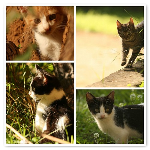 I gatti de La Zisa Palermo