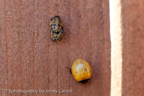 Ladybug Life