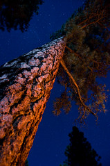 Warming Tree (Daniel Regner) Tags: grand canyon nikon d90 18200mm 18200 nikkor lens night long exposure warm south rim arizona united states midwest west trip vacation campfire woods pine needles moonlight bench fire trees tent camping camp cool crisp september autumn late summer friends road blue stars skies sky dark quiet bark mixed lighting tungsten daylight light streaks fun awesome bonding bond ten x campground national park system