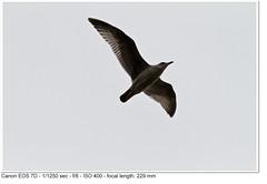 2010_10_09_1076 (John P Norton) Tags: f80 aperturepriority 11250sec canoneos7d 150500mm copyright2010johnnorton focallength229mm