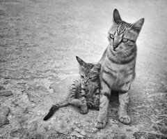 Never Leave Me Alone (Ben Heine) Tags: street family famille light wallpaper portrait blackandwhite inspiration cute art love beauty animal youth fur mom photography freedom paw eyes kitten child noiretblanc sweet pavement lumire quality young mother kitty atmospher