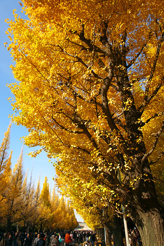 Yellows inAutumn #2