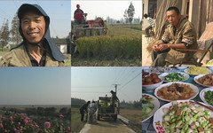 |Screen Shots of Laojia's Way of Farming (kkgd) Tags: food rice paddy organic agriculture eco chongming