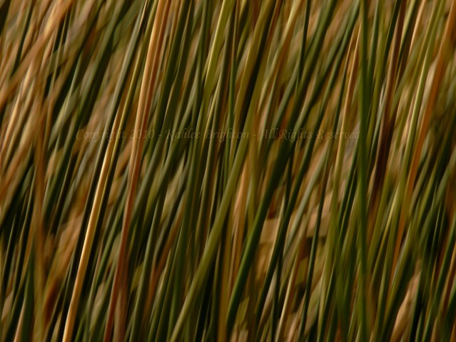 Reed Patterns 1