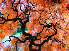 Tree Silhouette in Autumn (Stanley Zimny) Tags: park autumn trees orange tree fall nature colors leaves silhouette automne catchycolors leaf colorful colours seasons natural fallcolors herbst autumncolors fourseasons autunno autumnal colorexplosion 4seasons sgis ahorn jesien jesiennie 100commentgroup