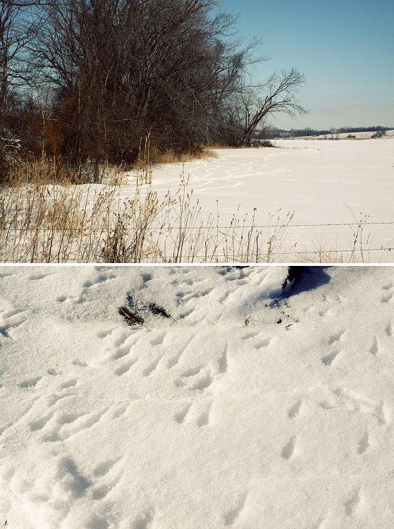 01-28-snow2