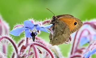 Butterfly on blue.