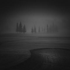 Strangers (Vesa Pihanurmi) Tags: conifers spruce fog mist monochrome blackandwhite dark espoo field night finland nature
