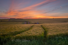 Tracking the wheat (Through Bri`s Lens) Tags: sussexdowns sussex wheat cereal cerealcrop farm farmer sunset wildflowers brianspicer canon5dmk3 canon1635f4