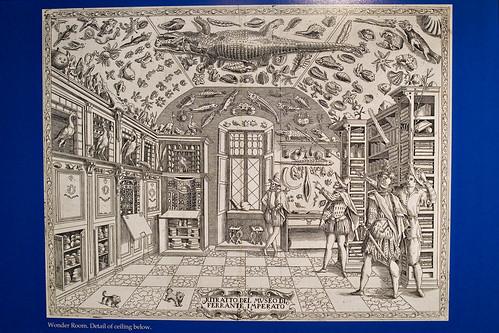 Wunderkammer Picture