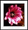 Equilibrada armonía (Jose Luis Mieza Photography) Tags: flowers flores flower fleur fleurs flor benquerencia florews reinante jlmieza reinanteelpintordefuego joseluismieza
