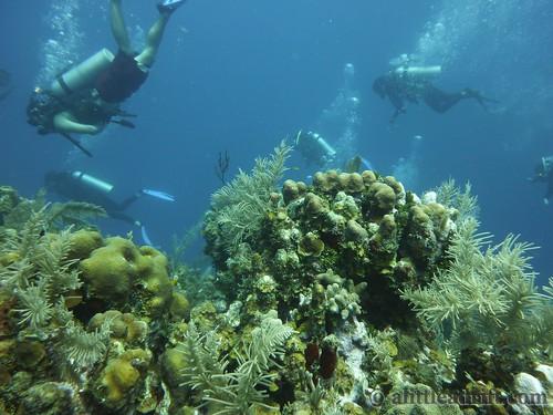 Diving Utila Honduras