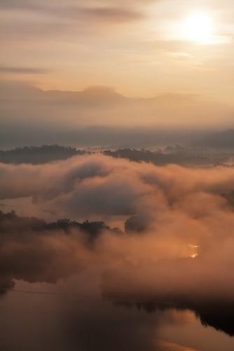 ... Golden mist ...
