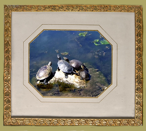 Oakland Pond Turtles, 1840s frame