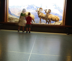 Diorama kids (Area Bridges) Tags: nyc newyorkcity newyork lucy sheep pentax manhattan august bighorn amnh dexter 2009 dex diorama americanmuseumofnaturalhistory k200d august2009 areabridges