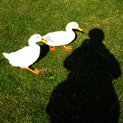shadow self-portrait about to be pecked by a duck (pho-Tony) Tags: auto shadow portrait green bird abbey grass self square coast bill duck shadows yorkshire north lawn vert east whitby squareformat format peck ritratto whitbyabbey shadowselfportrait 500x500