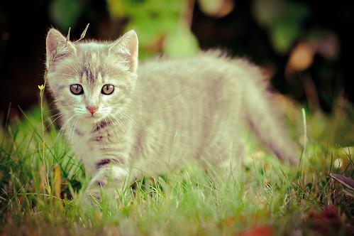フリー写真素材, 動物, 哺乳類, ネコ科, 猫・ネコ, 子猫・小猫,