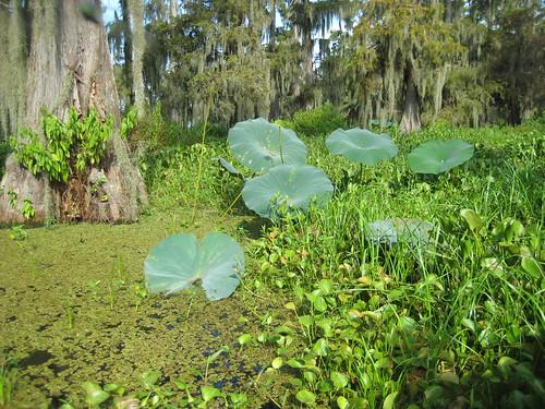 swamp tour 010