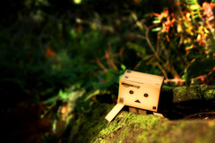 Danbo is the Tenzing Norgay of the forest (j.suciu) Tags: toys danbo revoltech danboard
