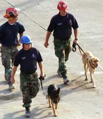 The Hero Dogs of 911