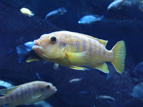 Georgia Aquarium 71