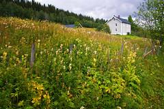 Vegkant i august (Krogen) Tags: summer nature norway landscape norge sommer natur norwegen august noruega scandinavia krogen landskap noorwegen noreg skandinavia oppland hugulia nordreland olympuse3