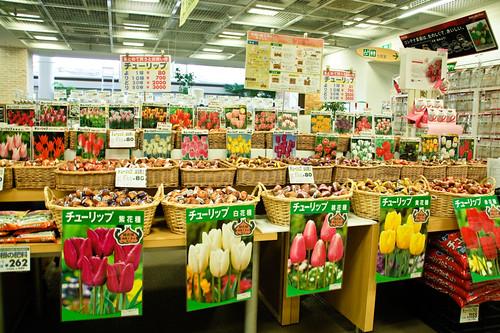 Choosing tulips