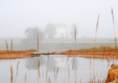 Misty morning (leifolsen) Tags: county morning autumn trees lake fall colors grass misty landscape island norge europa europe colours straw arctic nordic scandinavia nordnorge bobmarley senja fogg troms mistymorning northernnorway norweay deepnorth