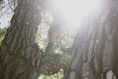 Girl Climbing Tree in Dress Terin Talarico Tags Light Summer Tree Girl Climb Colorado Afternoon Dress