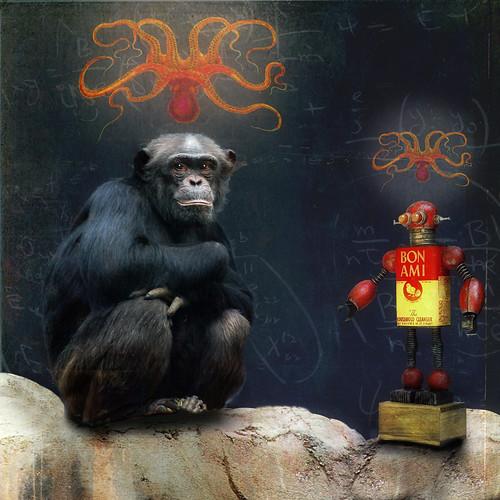 フリー写真素材, 動物, 哺乳類, ヒト科, チンパンジー,