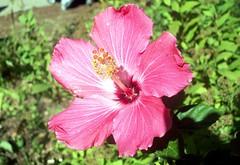 Flower_91110