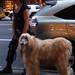 Hairy dog! - Lili Aviles