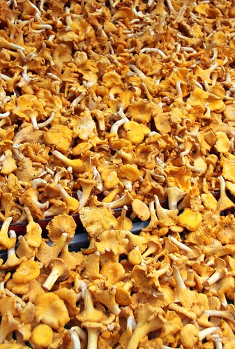 Chanterelles in Stockholm