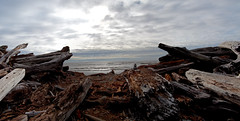 Beach Entrance (everkamp) Tags: ocean trees panorama beach forest coast washington nationalpark pacific panoramic driftwood olympicnationalpark stitched