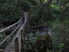 short sands welcome (carolyn_in_oregon) Tags: oregon carolyn coast pacificocean suspensionbridge oswaldweststatepark shortsandsbeach