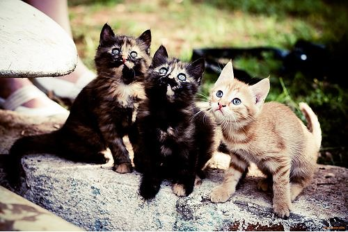 cute kittens looking at camera