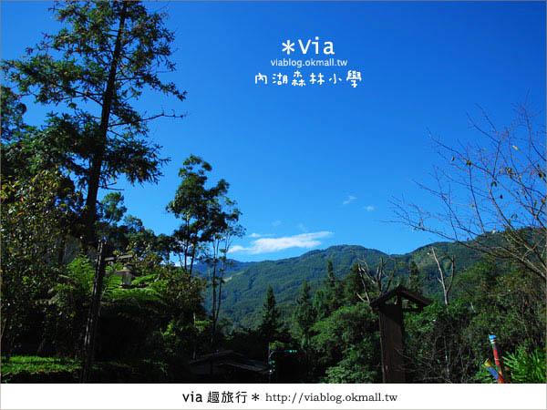 【溪頭一日遊】森林中的夢幻校園~內湖森林小學24