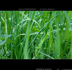 "week35:morgentau <a style=""margin-left:10px; font-size:0.8em;"" href=""http://www.flickr.com/photos/42507060@N08/5003416681/"" target=""_blank"">@flickr</a>"