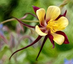 Yellow on Red (el.merritt) Tags: red flower macro yellow 5d f28 oilpaint ef100mm flowersasart pixelbender emphoto41