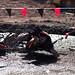 Warrior Dash - Windham, NY - 10, Sep - 09.jpg by sebastien.barre