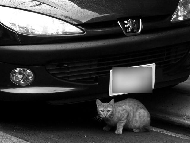 Today's Cat@2010-09-20