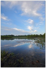 Blackwater Conservation Area (Mr. Greenjeans) Tags: summer reflection nature water clouds landscape pond 10mm canonefs1022mmf3545usm mrgreenjeans gaylon blackwaterconservationarea gaylonkeeling