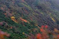 短い秋のはじまり