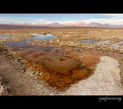 Salar de Atacama [1534] (josefrancisco.salgado) Tags: chile nikon desert desierto nikkor salar cl sanpedrodeatacama salardeatacama saltflat desiertodeatacama atacamadesert repblicadechile reservanacionallosflamencos republicofchile d3s 2470mmf28g iiregindeantofagasta provinciadeelloa